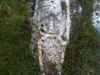 Misteriose statue scolpite nella roccia