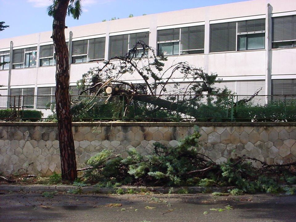 Il violento temporale a Grottaglie ha abbattuto addirittura alcuni alberi
