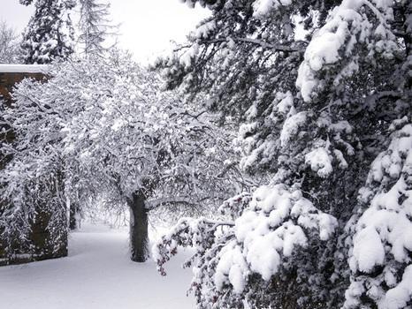 Maltempo Usa, bufere di neve nel Midwest