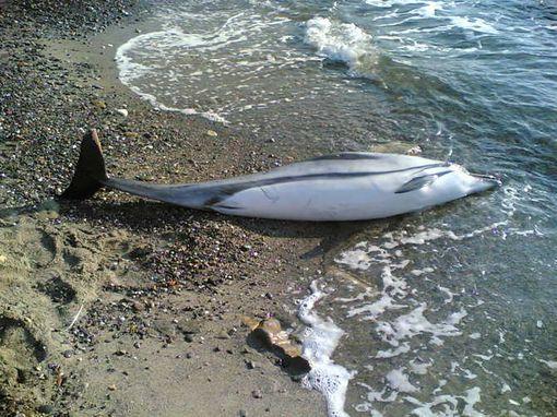 Moria delfini