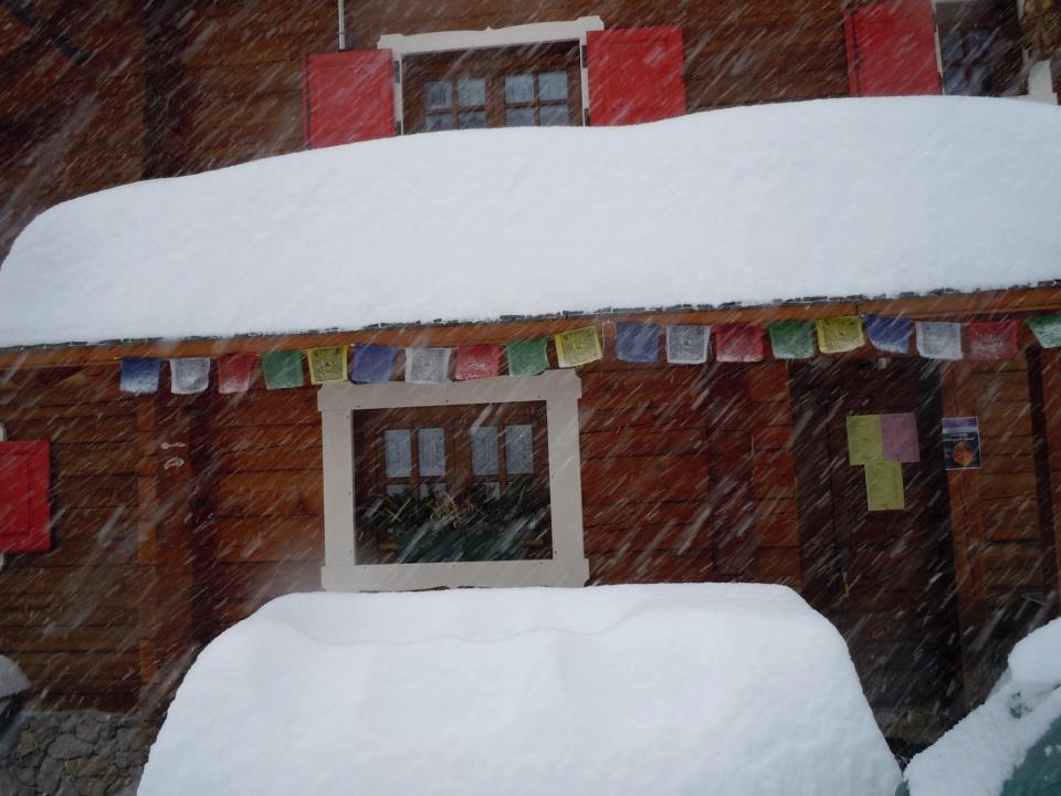 Rosa Puntel - Foto scattata al rifugio Zacchi (Tarvisio, UDINE)