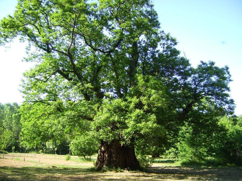 Alberi secolari: ecco la nuova legge che tutela gli spazi verdi in