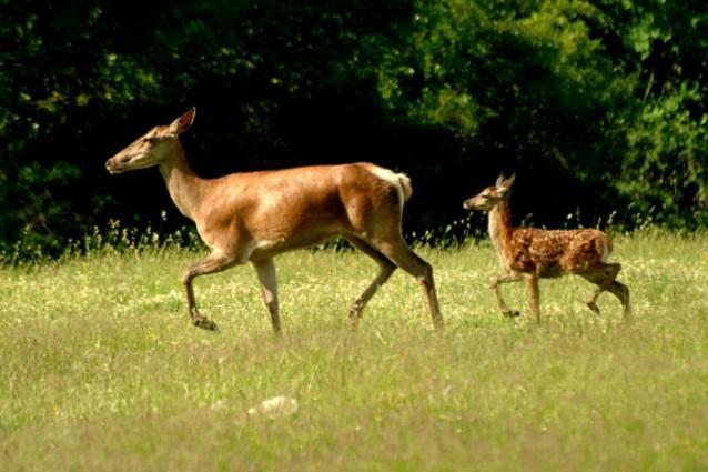 LEGGE SHOCK per la caccia