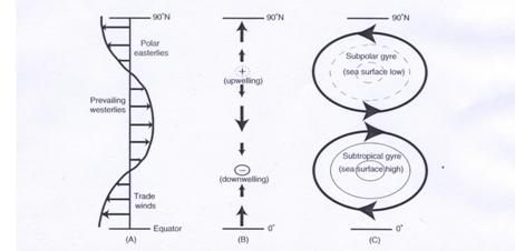 La persistenza dei venti in oceano aperto, provoca un downwelling e upwelling rispettivamente alle latitudini 30° e 60°