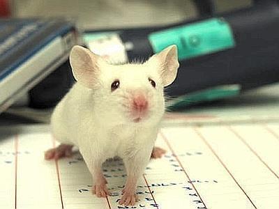 Eccezionale in Giappone: clonati 600 topi in laboratorio.