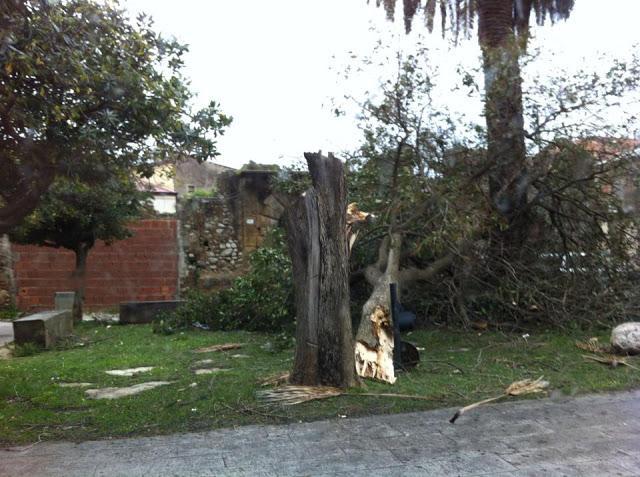 Polistena (Reggio Calabria) - Alberi spezzati dai forti venti di Scirocco.Fonte foto : Pagina Facebook Polistena