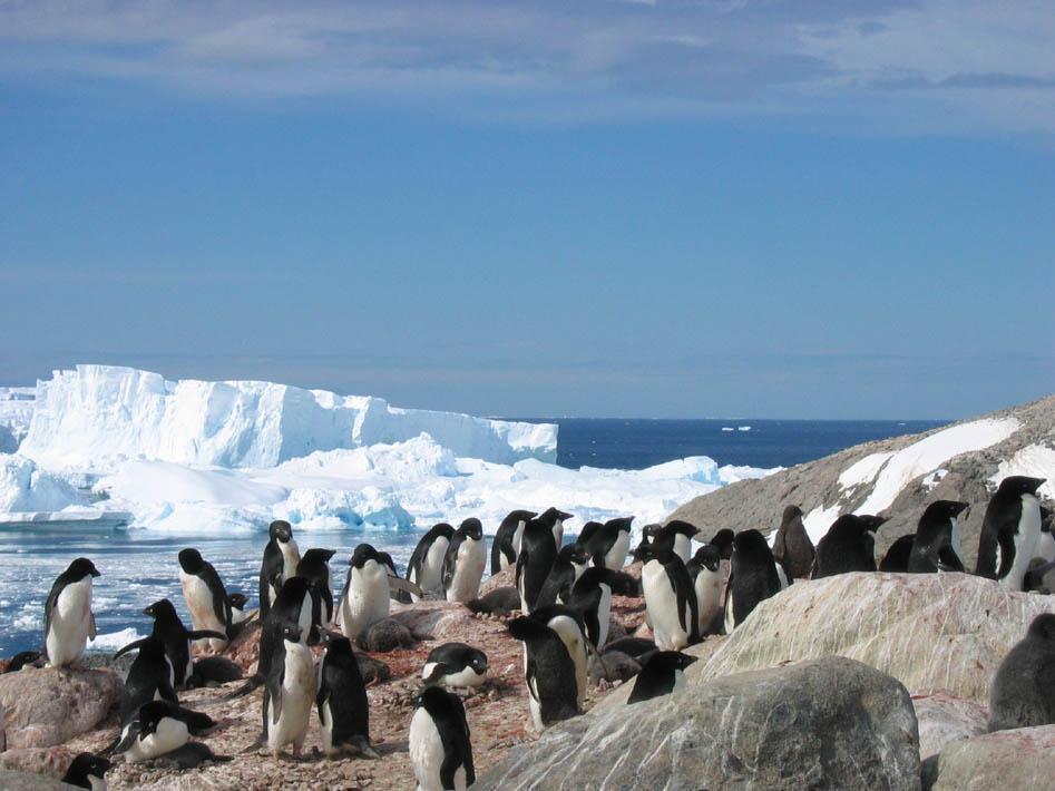 Ghiacciai Antartide: ecco perchè aumentano nonostante riscaldamento globale