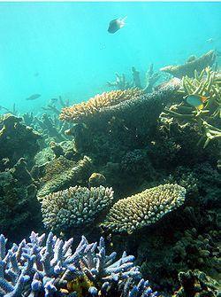 Un recente studio ha mostrato che è necessario limitare il riscaldamento degli oceani per salvare le barriere coralline (fonte immagine:wikipedia)