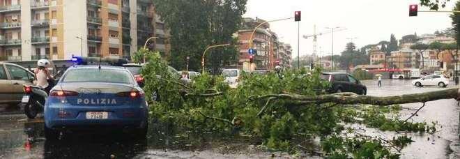 Albero caduto a Roma