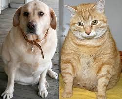 Cani e Gatti italiani sono obesi: ecco lo studio