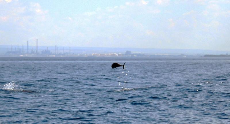 Delfini nel Golfo di Taranto