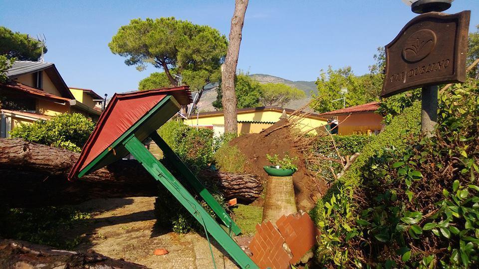 Forti raffiche di vento sul basso Lazio - Danni e alberi sradicati