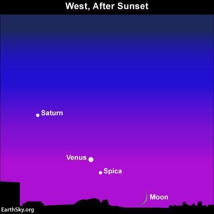 Bellissima congiunzione Luna-Spica-Venere