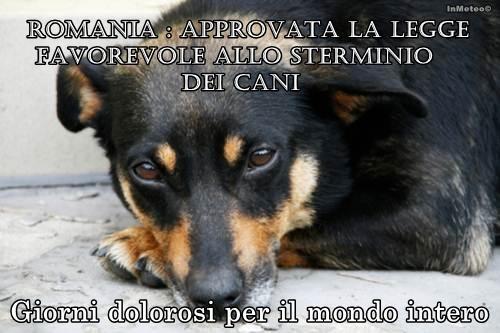 Romania : approvata la legge favorevole allo sterminio dei cani randagi