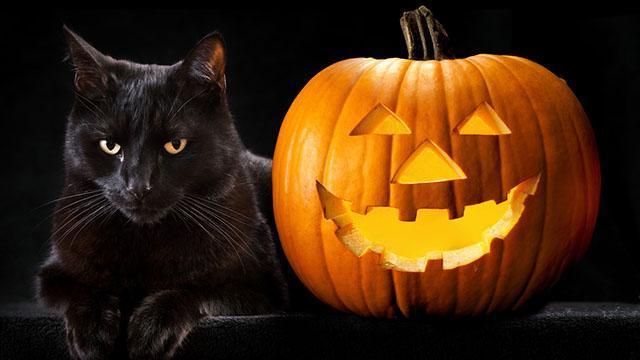 Halloween : a rischio i gatti neri