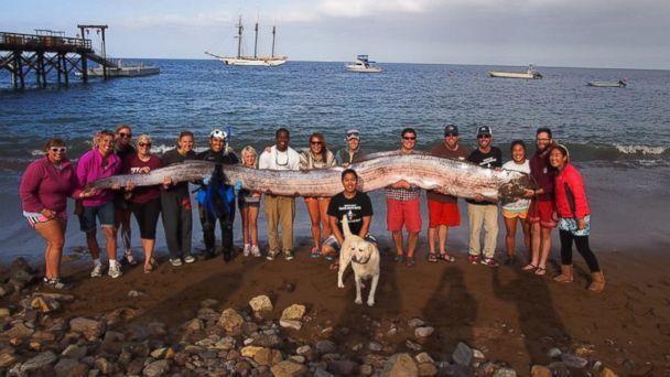 Pesce Remo pescato in California