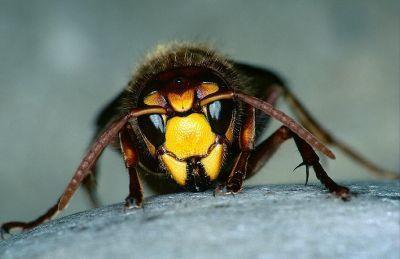 Calabria : tre vittime a causa delle vespe