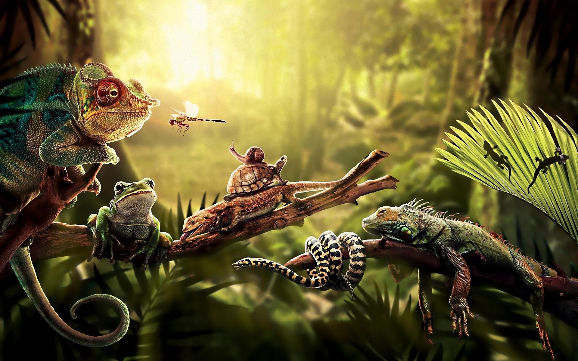 Il 3 Marzo si è celebrata la giornata mondiale della fauna