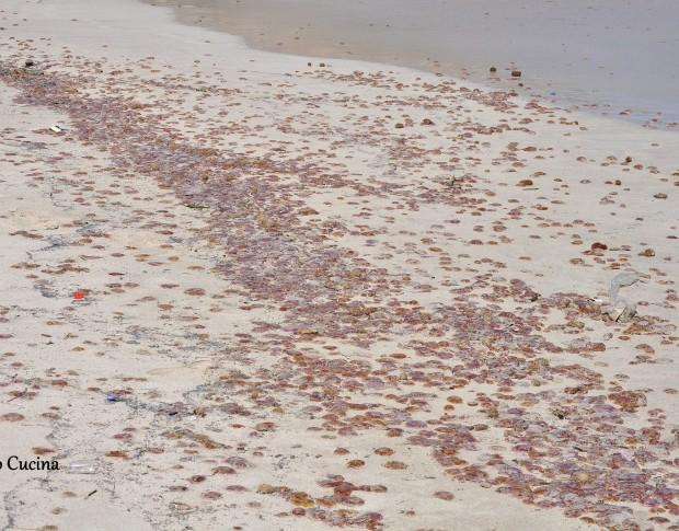 Migliaia di meduse invadono la spiaggia di Palermo in Sicilia: le incredibili immagini