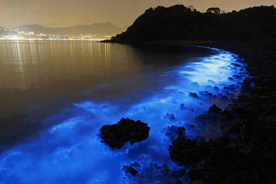 Bioluminescienza marina