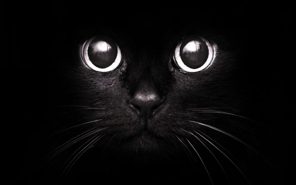 Giornata mondiale del gatto nero: una