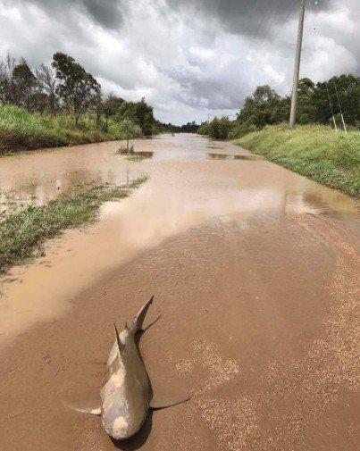 Ciclone in Australia e lo squalo... finisce in strada