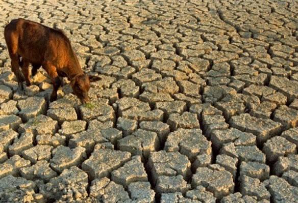 Emergenza siccità: la situazione nelle regioni più critiche