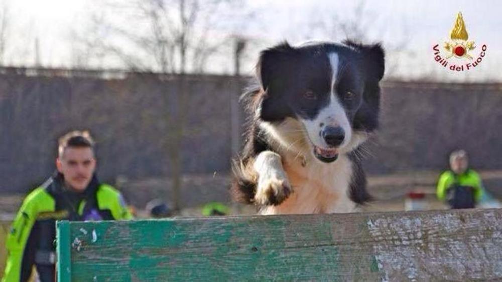 Il web ricorda Camilla, cane eroe di Amatrice morto sul lavoro