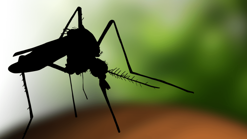 Febbre del Nilo, il contagio si allarga ancora: altri ricoverati a Milano