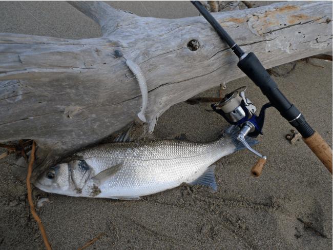 pesca alla spigola: carettere e esche